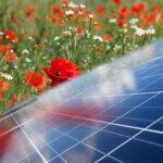 Integreer natuur en landschap in de energiestrategie, natuur en landschap